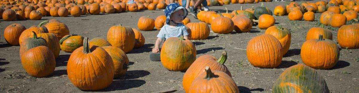 pumpkin-patch-10-of-20