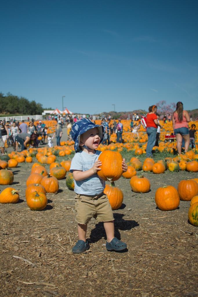 pumpkin-patch-6-of-20